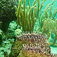 Vase-sponges---VERTICAL---Bruce-Kemp---IMG_3134