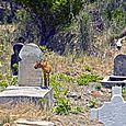 Mayeau Cemetary with Goat 3 - HORIZONTAL - Bruce Kemp - DSC_1151